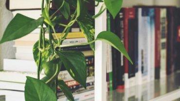 best-desktop-shelves-for-books-and-storage